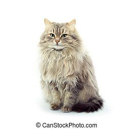 cat  isolated on a white background