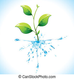 Watery Plant - illustration of plant with water root on...