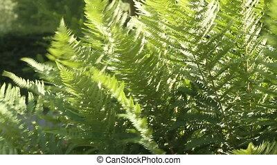 Fern leaves - Fresh green fern