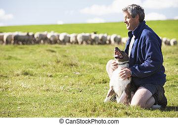 granja, trabajador, con, Multitud, de, Sheep