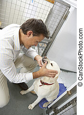 Vet Checking Dog In Pen