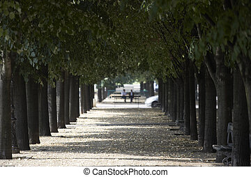Tree Lined Boulevard,Paris,France