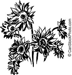 Sunflowers - black and white picture of nature
