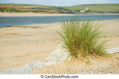 waters edge - beach and sand dune vegetation at the waters...