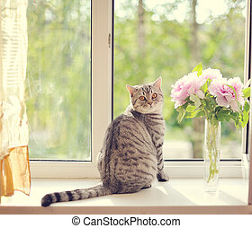kitten - The cat sits on a window sill near to colors and...