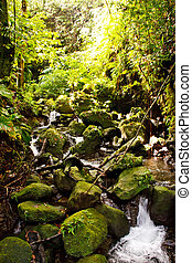 Stream Full of Mossy Rocks in a Rain Forest