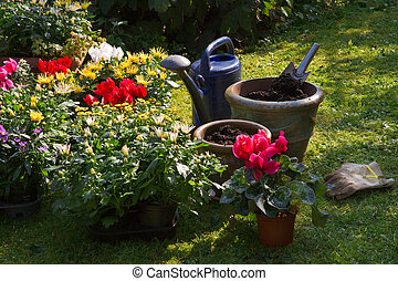 New plants in flowerpots for autumn garden - Garden with...