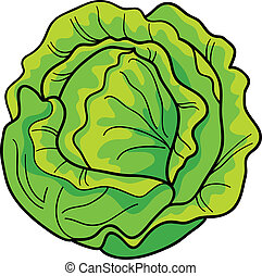 cabbage - cartoon Illustration of green cabbage