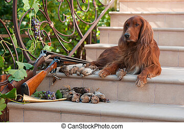 Bird dog and trophies - Bird hunting dog lying on a ladder...