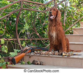 Bird dog and trophies - Bird hunting dog sitting on a ladder...