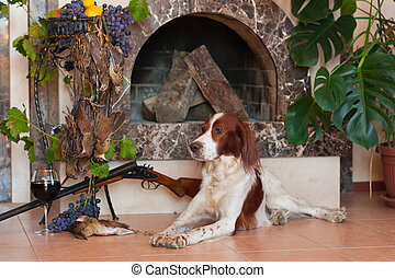 Bird dog fireplace wine - Bird hunting dog lying in front of...