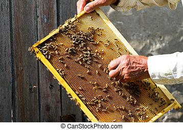 apiculteur, fonctionnement