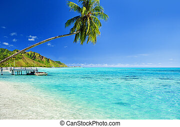 Palm tree hanging over lagoon with jetty - Palm tree hanging...