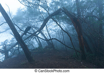 Misty scary forest  in fog