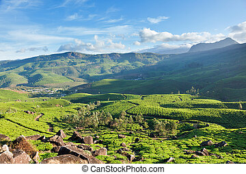 Tea plantations on surise. Munnar, Kerala, India