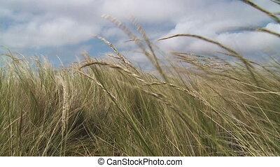 Grass in wind Slow motion Tripod