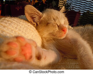 sweet dreams - little kitten sleeping on the balcony at the...