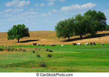 The cows in summer pasteurage from Russia