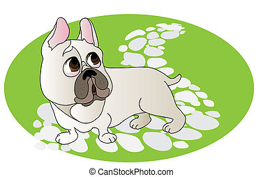Comical drawing of French Bulldog - Scared white French...