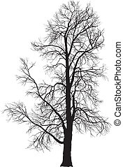 Chestnut tree - Vector illustration of chestnut tree in...