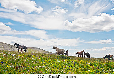horses against mountains