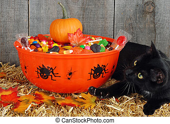 black cat protect halloween candy - black cat protecting...
