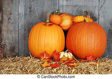 pumpkins with fall leaves - closeup pumpkins with fall...