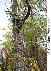 hunters tree stand - ladder stand in the forest for hunting