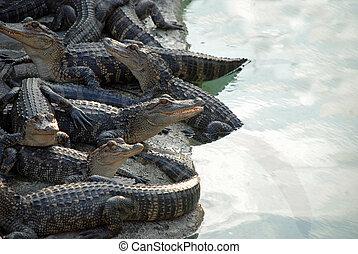 Reptil, pila