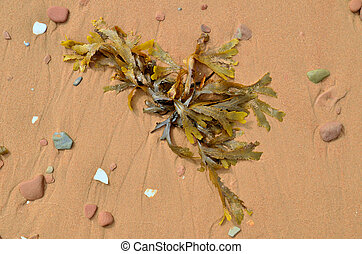 Seaweed and beach pebbles on the sand