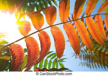 Autumn leaves macro back lit