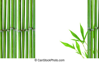 Border of Green small bamboo