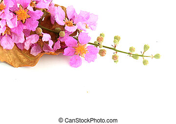 Close detail of Pink flowers