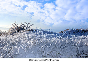frosty snow covered grass ditch