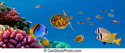 Underwater panorama with turtle, coral reef and fishes....