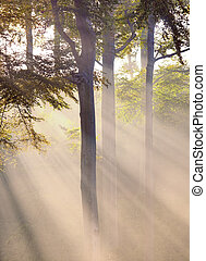 misty atmosphere and sunbeam in the forest
