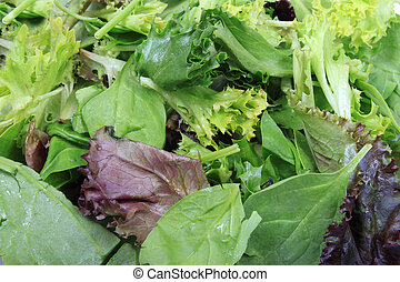 Close up of leafy greens like lettuce, spinach, and aragula