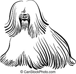 vector dog Tibetan Terrier breed - sketch of the dog Tibetan...