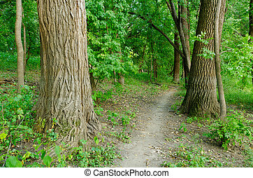A Walk in the Woods - A Dirt Path in the Middle of the Woods