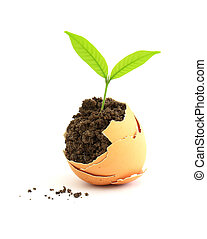 growing green plant in egg shell on white background