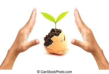 Um, disparar, criar, ovo, Símbolo, natureza,...