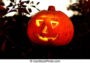 Jack O Lantern - Halloween pumpkin in the forest of bushes