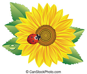 sunflower and red ladybird - vector sunflower and red...