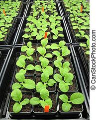 plantas, invernadero