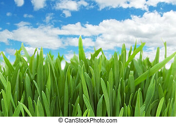 Green grass against blue sky