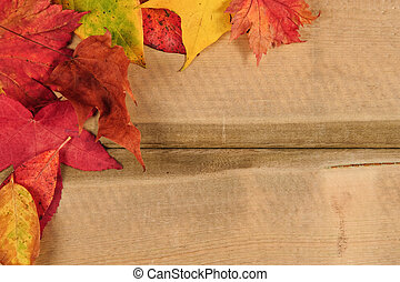 Vibrant Autumn Fall Season leaves on rustic wood background...