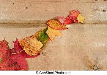 Vibrant Autumn Fall Season leaves on rustic wood background...