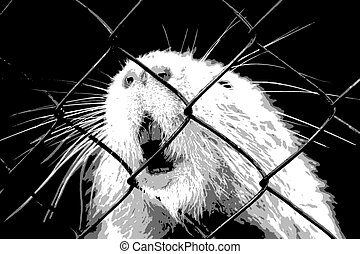 Animal in captivity - Screaming mouse in the cage