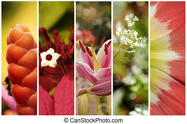 Flowers - Collection of flowers close up with shallow depth...
