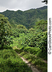 Dirt Road through the jungle in Raiatea, Tahiti - A dirt...